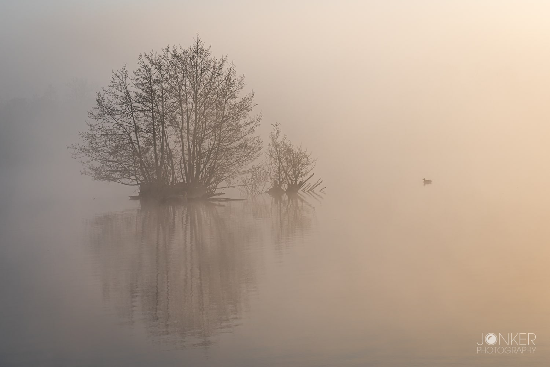 Boompje in de mist 1 min