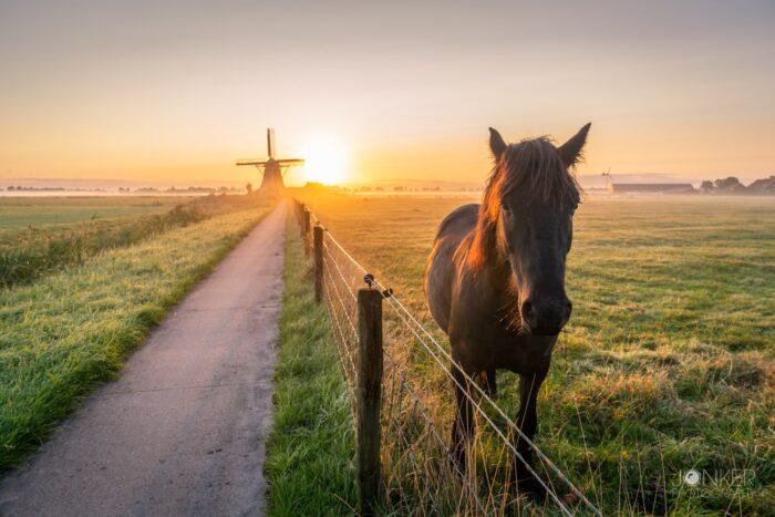 Het paard 1 min